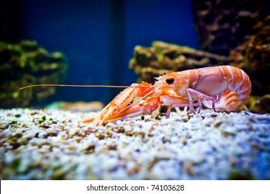 Live Shrimp Images, Stock Photos & Vectors | Shutterstock