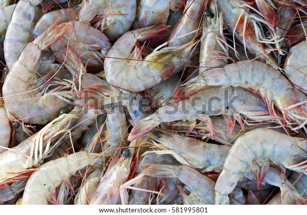Shrimp exposed in the fish market of Santos, coastal city of the state of Sao Paulo, Brazil