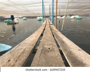 Shrimp farm feed tray  bridge feed tray  white shrimp vanamei shrimp pond culture