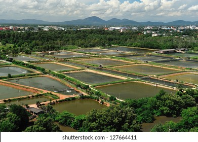 The Shrimp farming in thailand from aerial view.