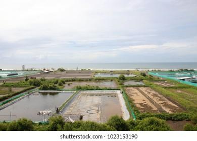 shrimp farms on the beach