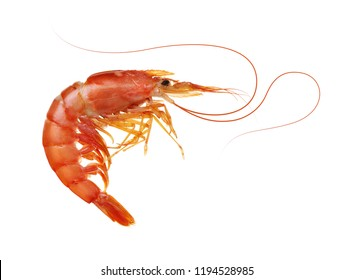 Shrimp isolated on white background.