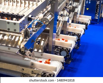 Shrimp on the conveyor. Cleaning equipment tiger pistol shrimps. Seafood processing. Conveyor line with seafood. manufacture of food products. Conveyor line for food processing. Modern equipment.