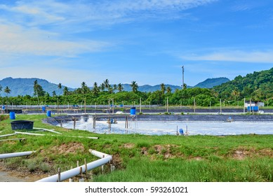 Shrimp (prawns) farm on the background blue sky and white clouds. Aerator turbine wheel oxygen Into water.
