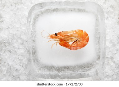Shrimp ready to serve on an ice block