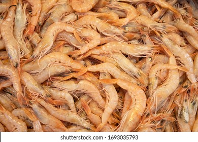 Shrimps in fish market. Unpeeled and raw crustacean. Healthy and delicious ingredient for salad and appetizer.