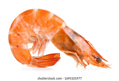 shrimps isolated on a white background full depth of field
