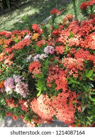 Shrub with colorful flowers