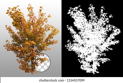 Shrub in fall isolated on a transparent background via an alpha channel of great precision. Very high quality mask without unwanted edge. High resolution for professional digital composition.