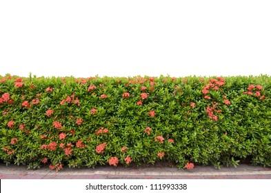 shrub fence isolated on white background