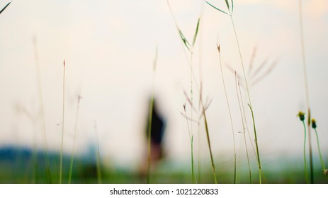 Shrub grass in the field. The grass natural background blur.