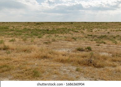 shrub and grass in the steppe near the Syr Darya river, Kazakhstan. - Shutterstock ID 1686360904