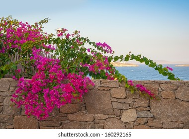 Shrub with pink flowers on the background of the  sea and sky ...