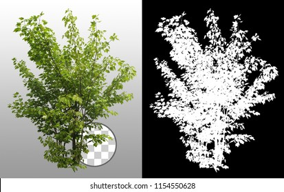 Shrub in summer isolated on a transparent background via an alpha channel of great precision. Very high quality mask without unwanted edge. High resolution for professional digital composition.