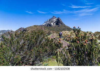 Shrubs with flowers and climbers in the páramos of Rucu Pichincha