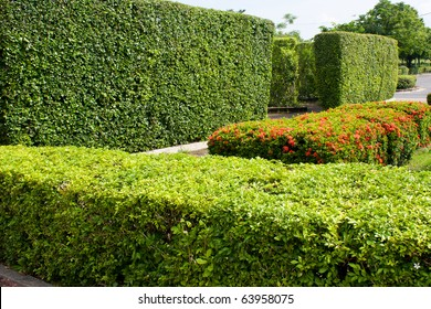 Shrubs in the park are arranged in a row the same balcony