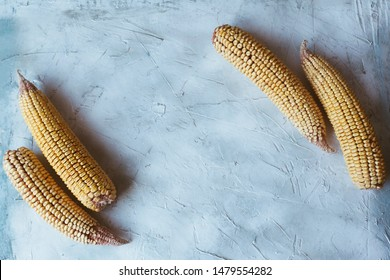 Shucked and cleaned sweet corns on bright blue background. Sweet corns on the desk. Sweet corns image for background usage with big copy space for text