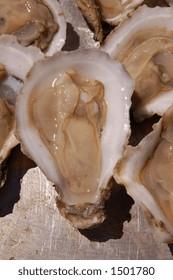 Shucked fresh oyster on a half-shell
