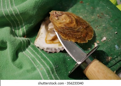 Shucking fresh oysters on a kitchen towel