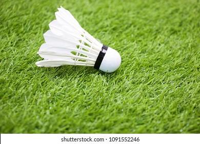 Shuttercock is on green grass