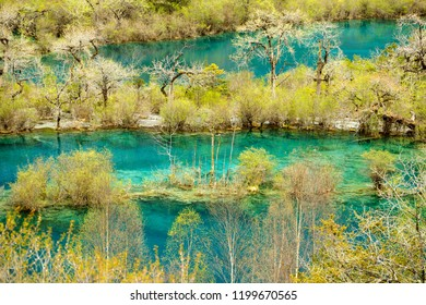 Shuzheng lake in Jiuzhaigou, mountains and trees covered by snow.The park is declared Unesco World heritage site.