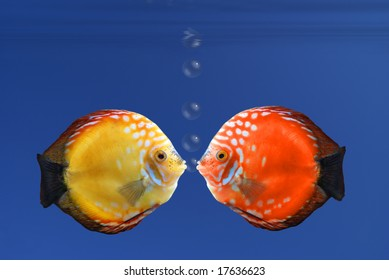 Shy fish reddening after a kiss - illustration