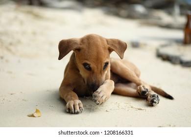 Shy puppy on the beach