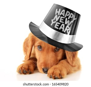 Shy puppy wearing a Happy New Year top hat.