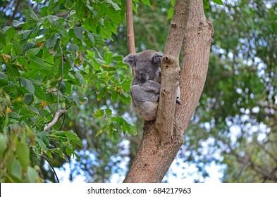 Shy in a tree