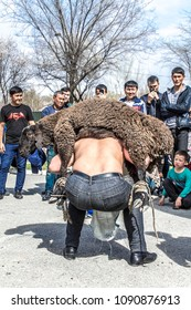 Shymkent, Kazakhstan - March 20, 2018: A man raises a sheep on the holiday of Nauryz on the day of the spring equinox.