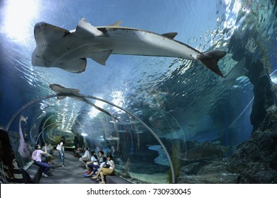 the Siam Ocean World Aquarium in the city centre in Pratunam in the city of Bangkok in Thailand, Southeastasia, thailand, bangkok, december 31, 2013..