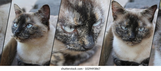 Siamese cat background banner with mesh effect