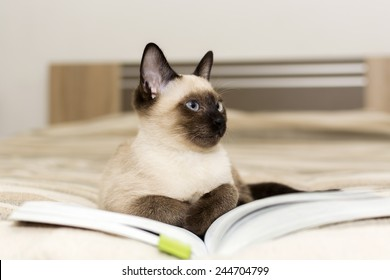 Siamese cat lying on a book