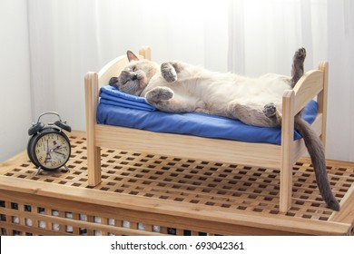 A Siamese cat lying on a wooden bed in a bedroom with clock