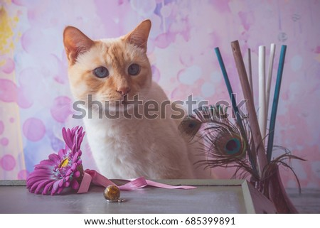 Siamese Cat Red Color Blue Eyes Stock Photo (Edit Now) 685399891