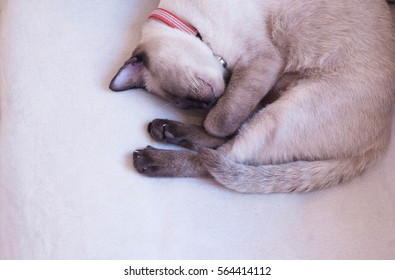 Siamese cat 's sleeping
