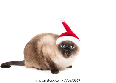 Siamese Cat with Santa hat looking up and sticking tongue out on a white background isolate