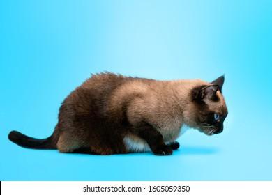 1000 Cat Vomit Stock Images Photos Vectors Shutterstock