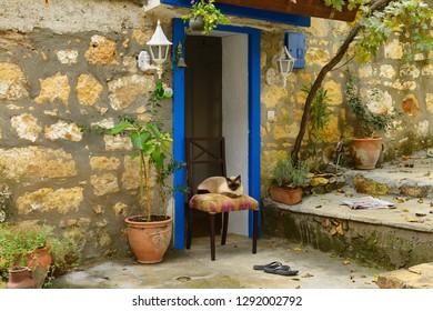 Siamese cat sitting on chair in doorway of stone house in hillside village of Yesilyurt, Malatya, Turkey - November 12, 2012