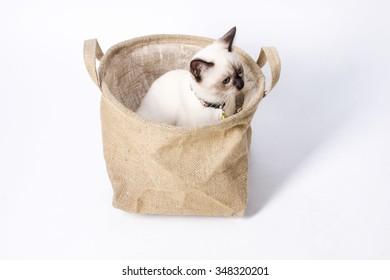 Siamese Cat Sitting in Sackcloth Bag, White Background