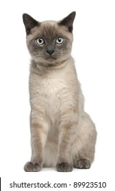 Siamese kitten, 6 months old, sitting in front of white background