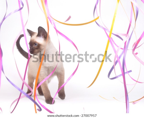 A siamese kitten plays with long colorful streamers on a white background