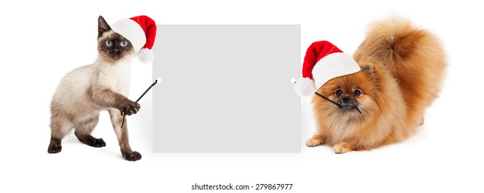 Siamese kitten and Pomeranian dog holding up a blank white sign while wearing red Christmas Santa Claus hats