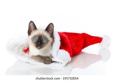 Siamese kitten in a santa claus hat