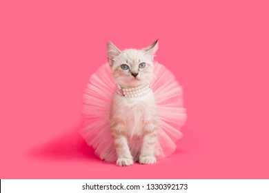 Siamese Kitten wearing a pearl necklace and a pink tutu ballet skirt, pink background.