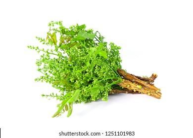 Siamese neem tree, Nim, Margosa, Quinine on white background