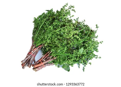 Siamese neem tree, Nim, Margosa, Quinine (Azadirachta indica A. Juss. Var. Siamensis Valeton) Thai vegetable.Isolated on white background. This has clipping path with soft shadow.