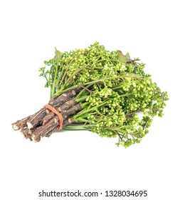 Siamese neem tree, Nim, Margosa or Quinine (Azadirachta indica A. Juss. Var. Siamensis Valeton) isolated on white background.vegetables