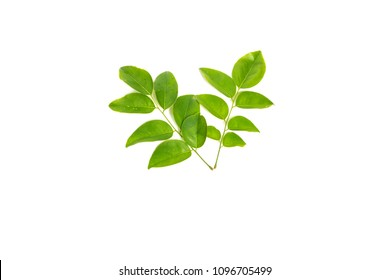 Siamese Rosewood leaves isolated on white background.Dalbergia cochinchinensis Pierre .