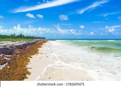 Sian Ka'an Biosphere Reserve, Quintana Roo / Mexico. White sand beach with sargasso algae